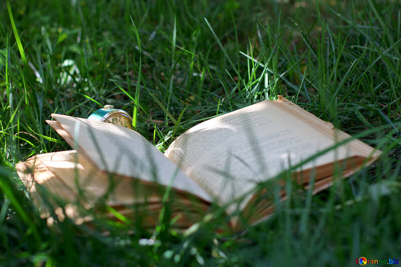 The book and the grass №34856