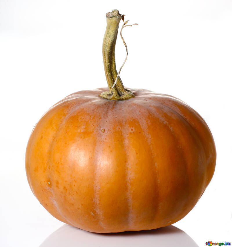 Pumpkin in isolation without background №34970