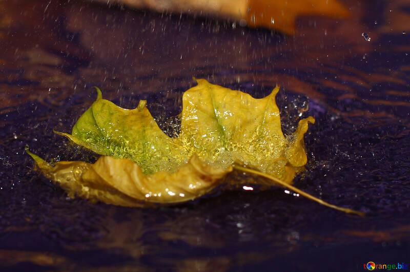Autumn leaf background rain №34619