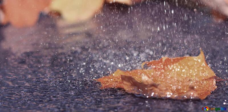 Under the autumn rain №34709