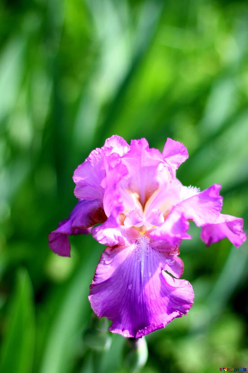 娇嫩的花 №34794