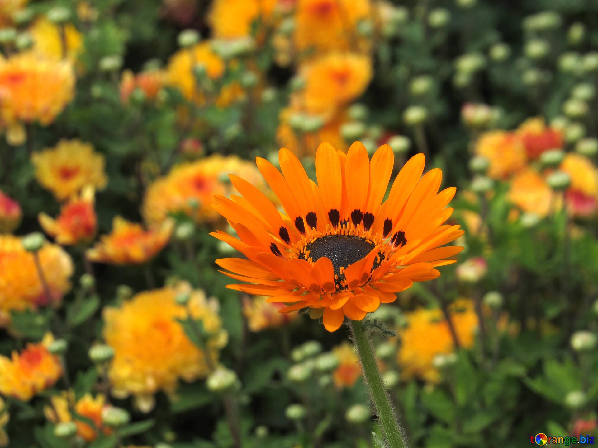 Garden Flowers Beautiful Bright Flower Park 35809