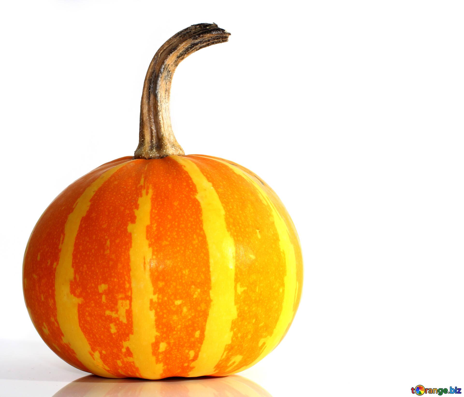 Pumpkin Isolated On White Background Beautiful Pumpkin On