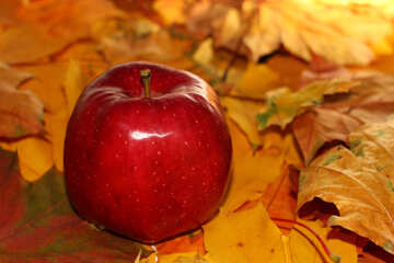 Autumn apple №35265