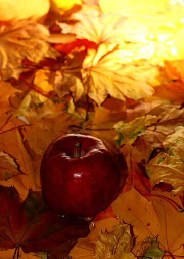 Apple on autumn leaves №35266
