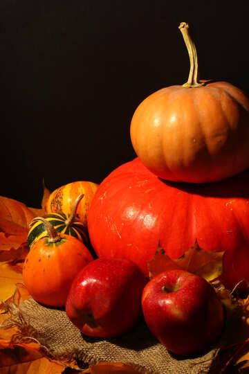 Осенний натюрморт с яблоками и тыквами №35335