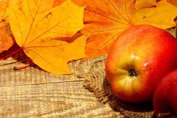 Older apples №35161