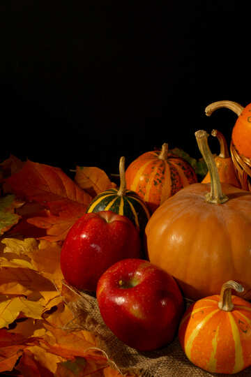 Apples and pumpkins №35321