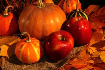 Apples and pumpkins №35323