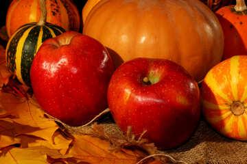 Тыквы и яблоки натюрморт №35324