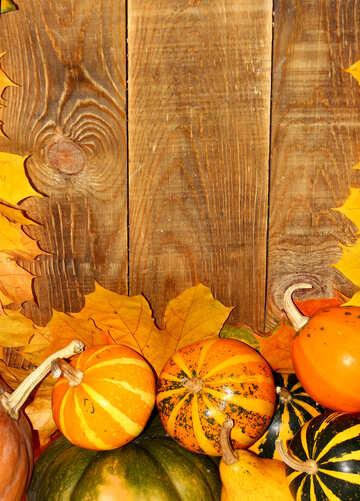 Herbst Hintergrund mit Kürbissen unten №35229