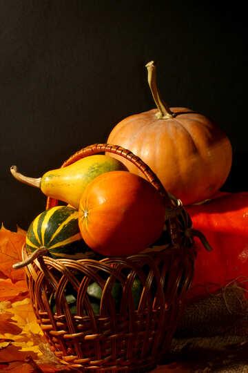 Still life with pumpkin №35349