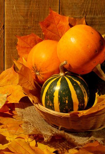 Still life with pumpkins №35351