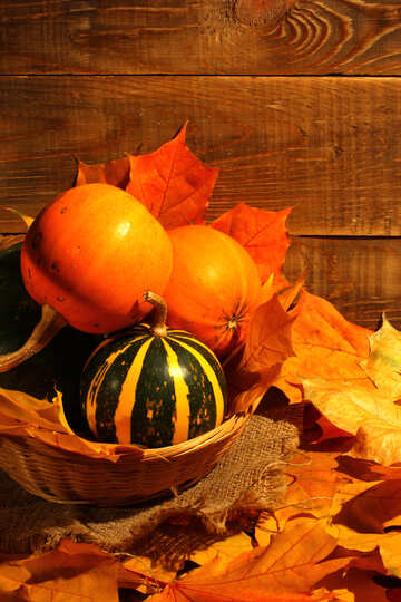Still life with pumpkins №35352