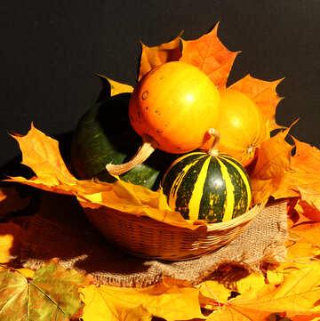 Still small pumpkin №35359