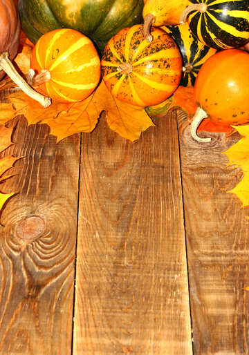Autumn background with pumpkins №35236