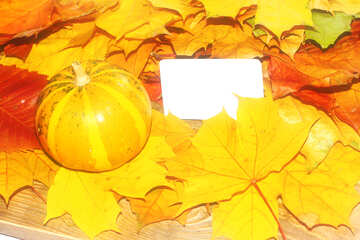Bright background with leaves and white card №35185