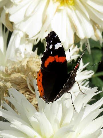 Butterfly on flower №35828