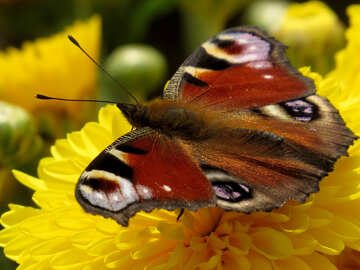 Butterfly wallpaper for desktop №35840