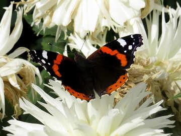 Butterfly on flower wallpaper for desktop №35826
