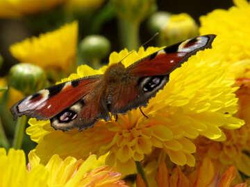 Butterfly №35842