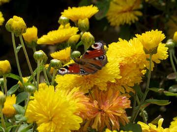 Beautiful Butterfly №35835