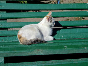 Gatto in panchina №35855