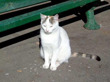 White cat with striped tail №35857