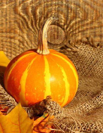 Still life with pumpkin on fabric №35457