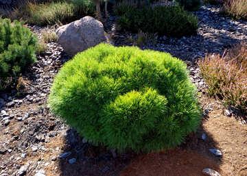 Pine Bush №35865