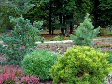 Different conifers №35917