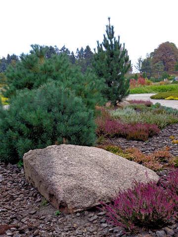 Pine Park №35915