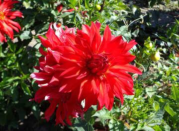 Fiore rosso №35858