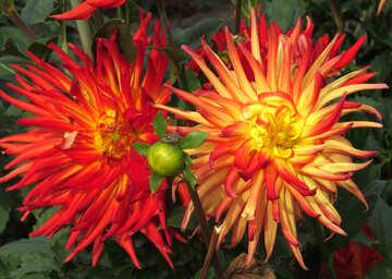 Feuer-Blumen №35849