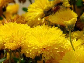 Gelbe Blumen №35832