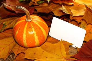 Einladungskarte für halloween №35194
