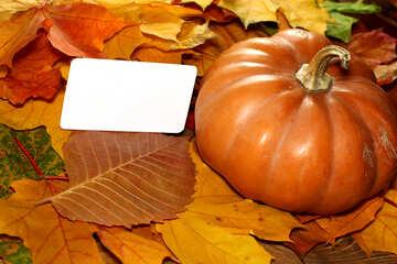 Invitation to the halloween pumpkin №35183