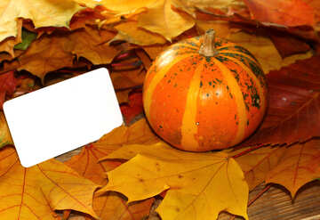 Picture background to the invitation with pumpkin №35187