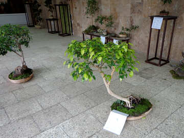 Exhibition of bonsai №35758