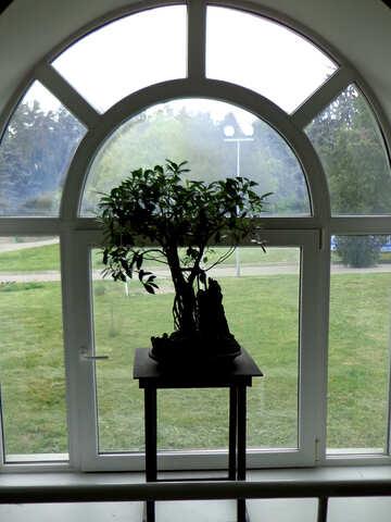 Indoor plant №35749