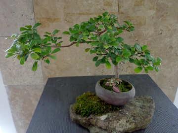 Miniature tree №35757