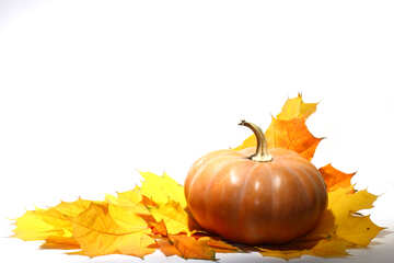 Pumpkin with autumn leaves no background