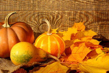 Cover pumpkin and autumn leaves №35420