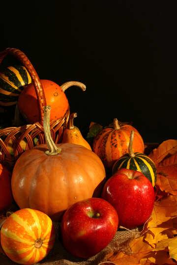 Cosecha de otoño №35327