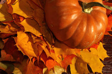 Pumpkin on autumn leaves №35390