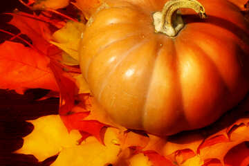 Pumpkin on autumn leaves №35395