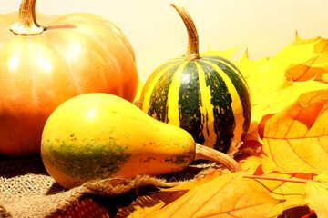 Kürbis auf Herbstlaub №35416