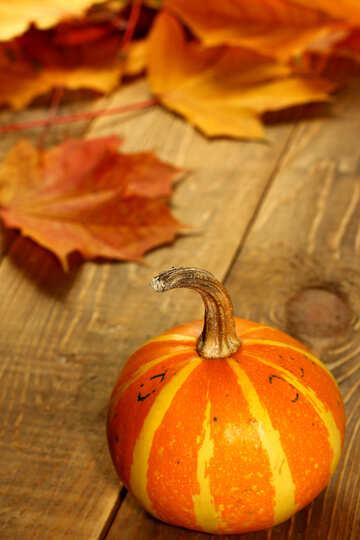 Calabaza en la mesa de otoño №35203