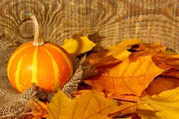 Wallpaper with pumpkin and autumn leaves №35452
