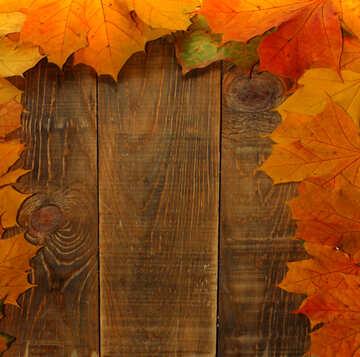 Carte vuote di sfondo per le foglie autunnali №35237